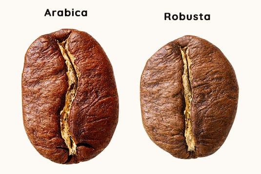 Diferencia entre los granos de arábica y robusta